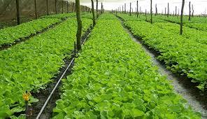 Program Holtikultura yang diberikan oleh Harita Nickel